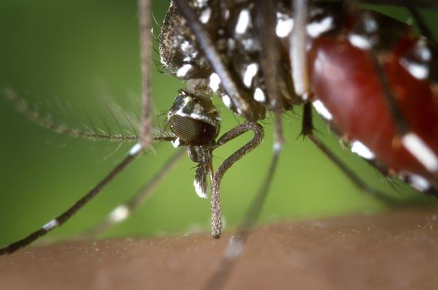 mosquito-tigre-farmaciaferrerxirivella-texto